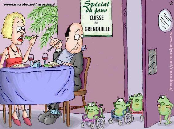 gif grenouille    15